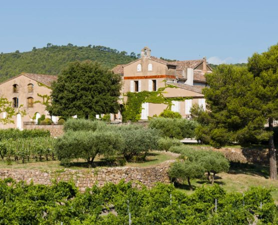 green rows of grape growing with big trees and vineyard house on a mountain of barbeyrolles vineyard in France